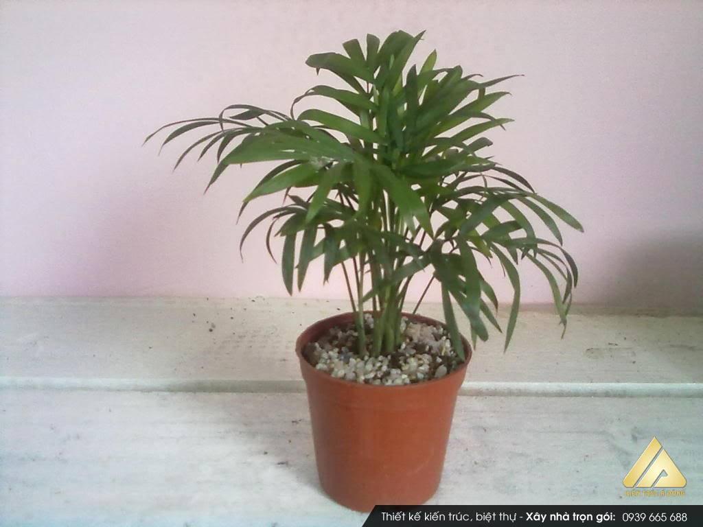 Sáu loại cây tốt cho phong thủy văn phòng